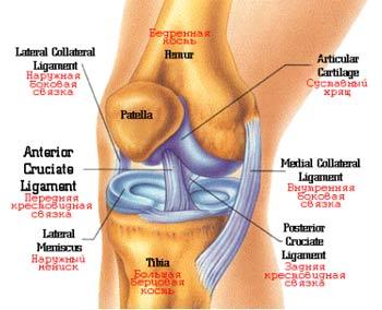 Почему долго болит колено после ушиба винстрол его влияние на суставы