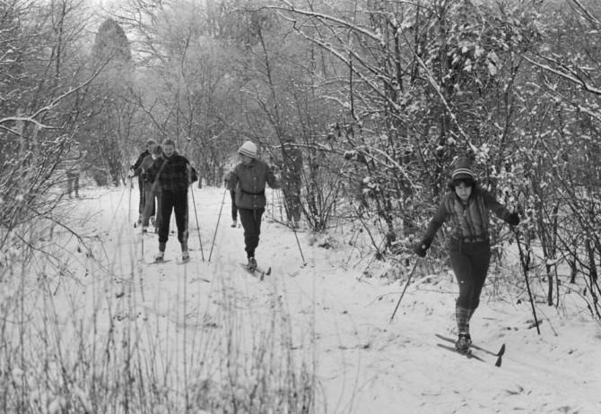 Группа любителей беговых лыж в лесной местности