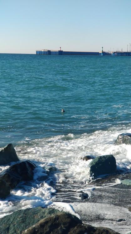 Черное море в районе Олимпийского парка