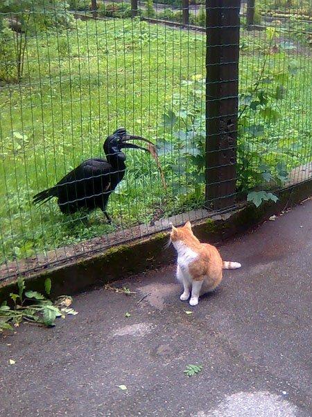 Безвизовый кот и ворона за пограничным забором