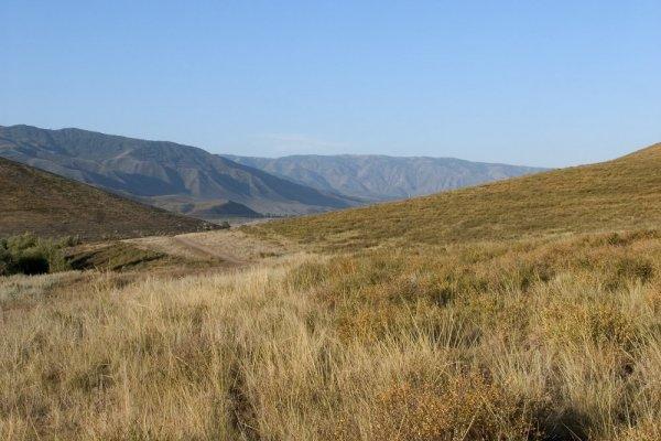 Степь в долине р.Нарын.