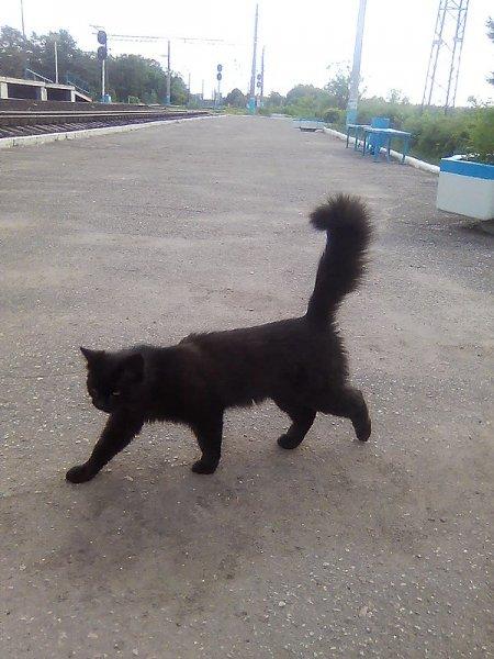 Ст.Суходрев. Кот вокзальный.