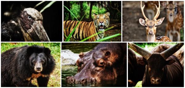 Фауна и флора: все живое - животные, рыбы, птицы, насекомые, растения